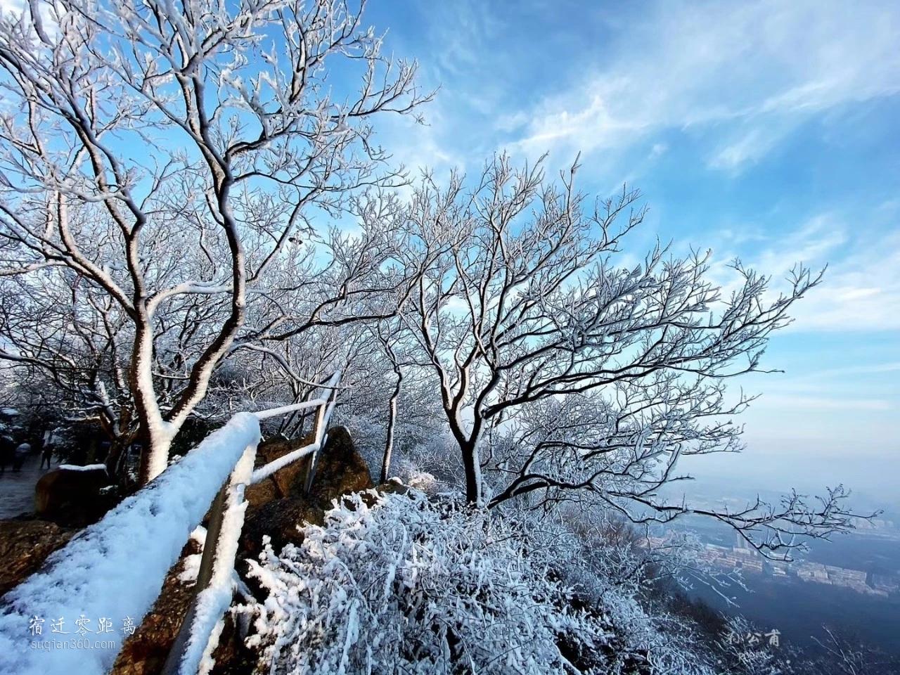 雪后紫金山,期待新宝5下载app手机下载的第一场雪