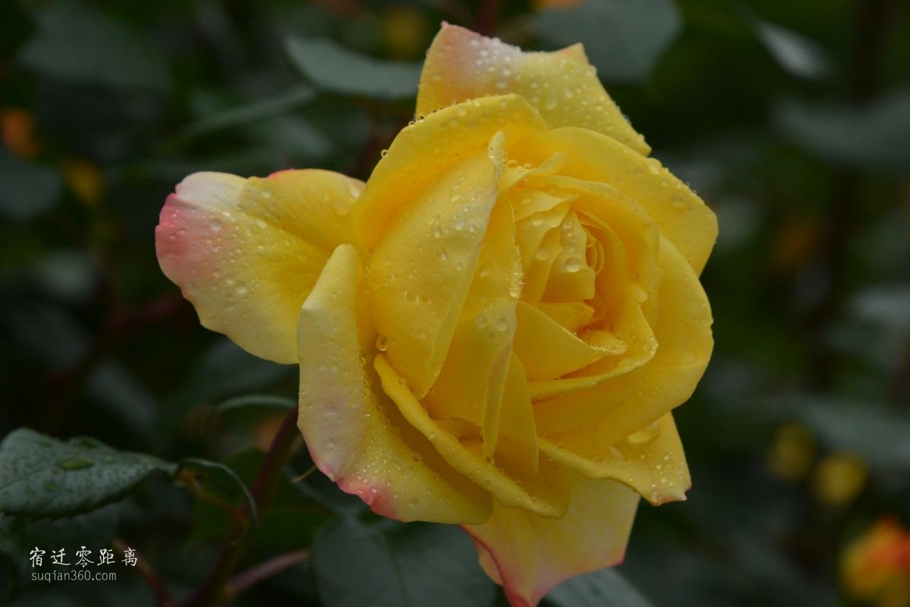 美丽绽放,休息了看看花