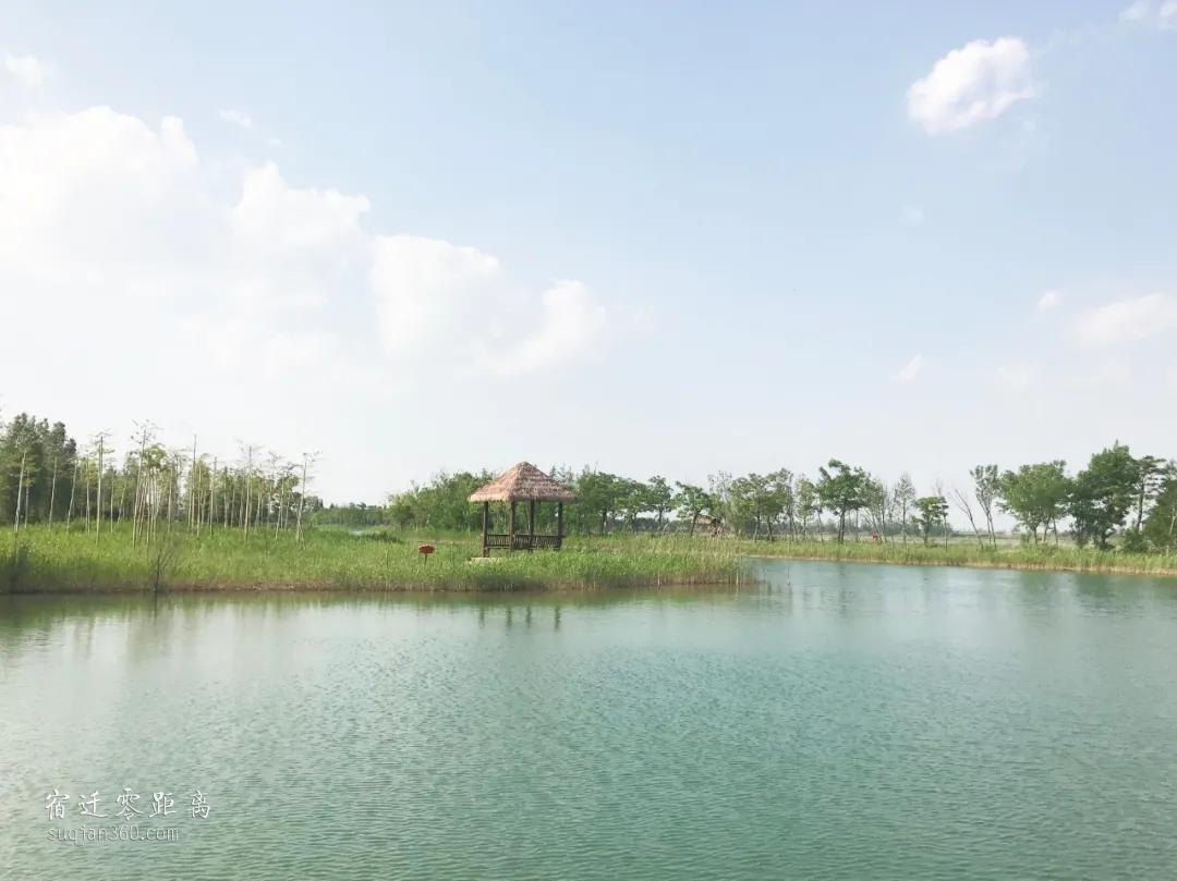 八月,想去泗洪洪泽湖湿地了!