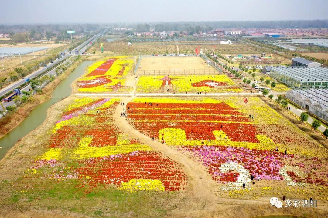 泗阳这个村出名了!很多人慕名而来,竟然是因为一朵花