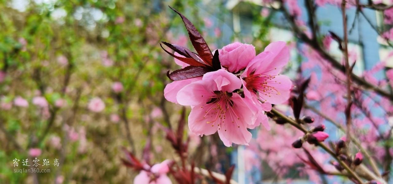 春天就是赏花的时候,请你欣赏