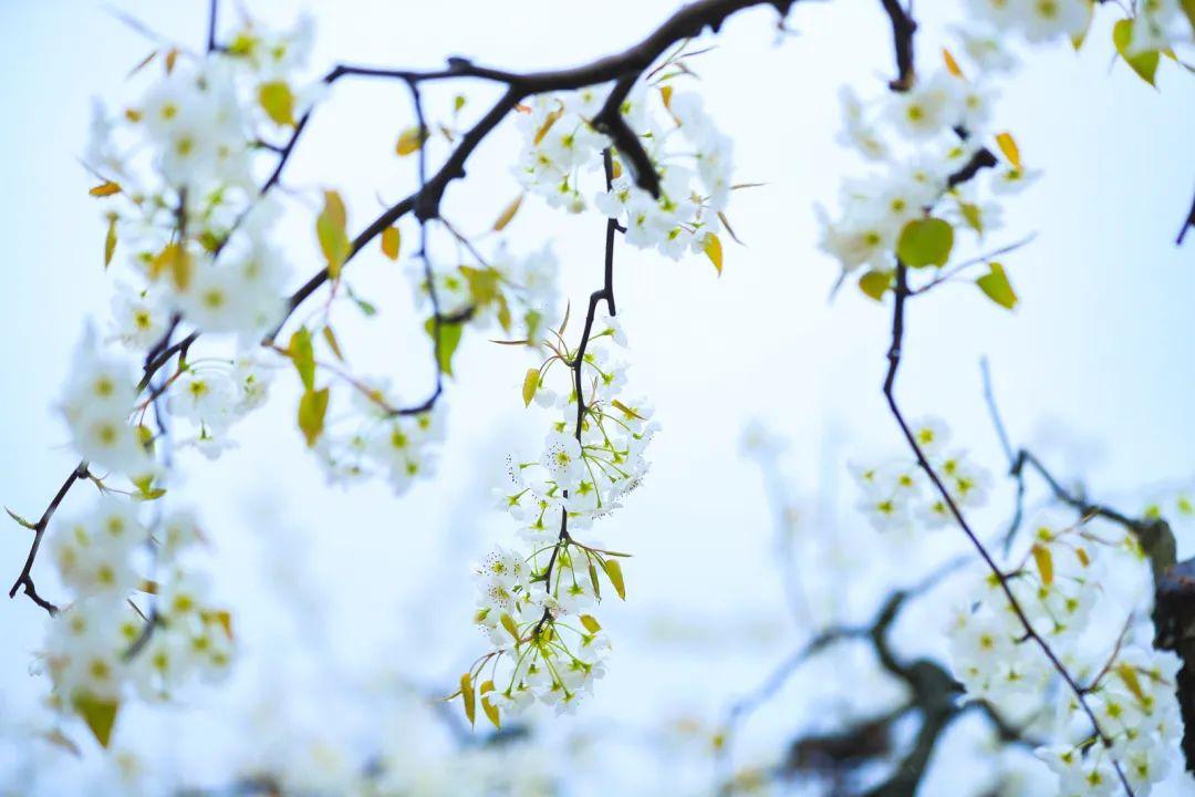 宿豫的春天在哪里?当然戳这里!