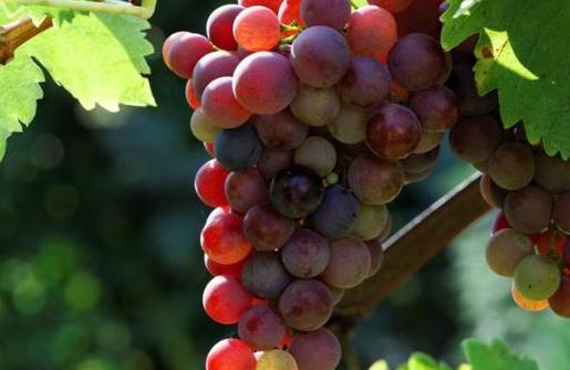 """秋季:宜吃果,忌吃瓜,5种""""果""""经常吃,或能健脾、补气血"""